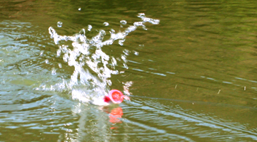 大喧譁!Deps BUSTERK Bass釣專用喇叭蛙
