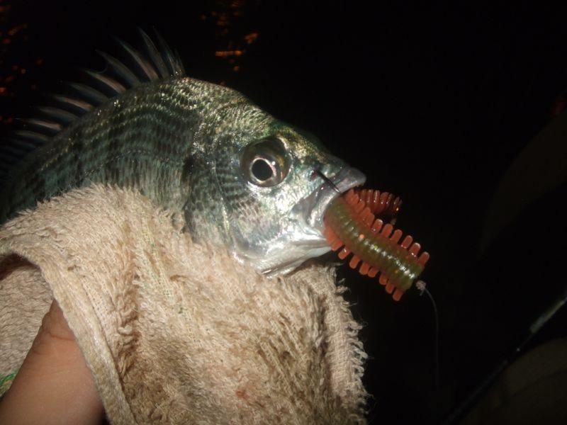 中小型底棲魚/黑鯛 軟餌釣組 的曲柄鉤選擇