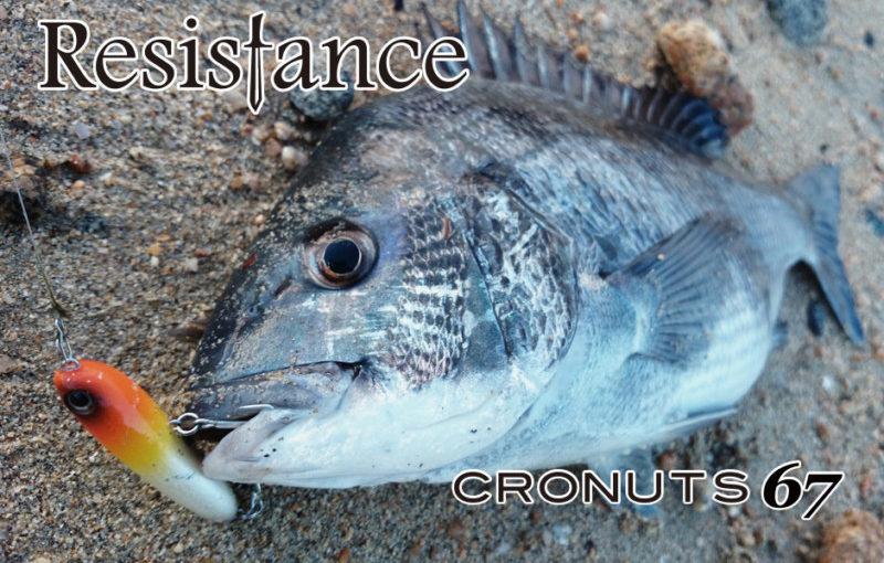 輕巧滑移TACKLE HOUSE CRONUTS 黑鯛用水表餌