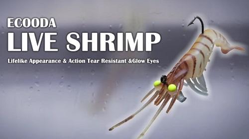 活蝦! ECOODA LIVE SHRIMP 2″&3″